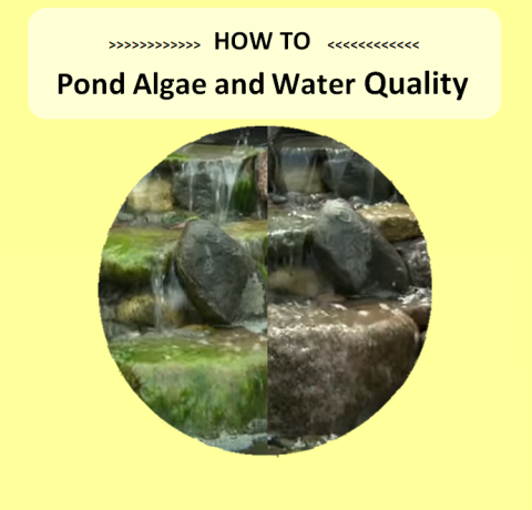Pond Algae and Water Control - Marquis Gardens