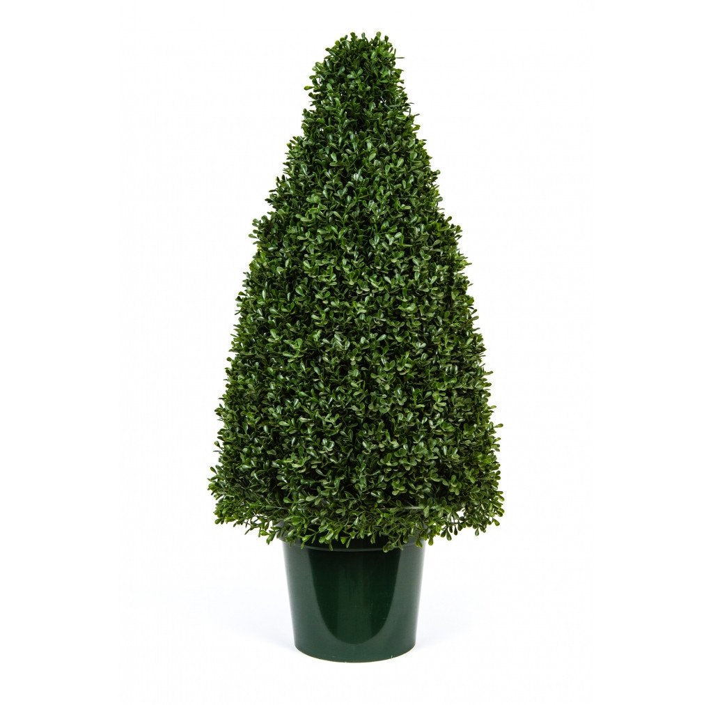 "Photo of Tea Leaf Cone Topiary, 36""  - Marquis Gardens"
