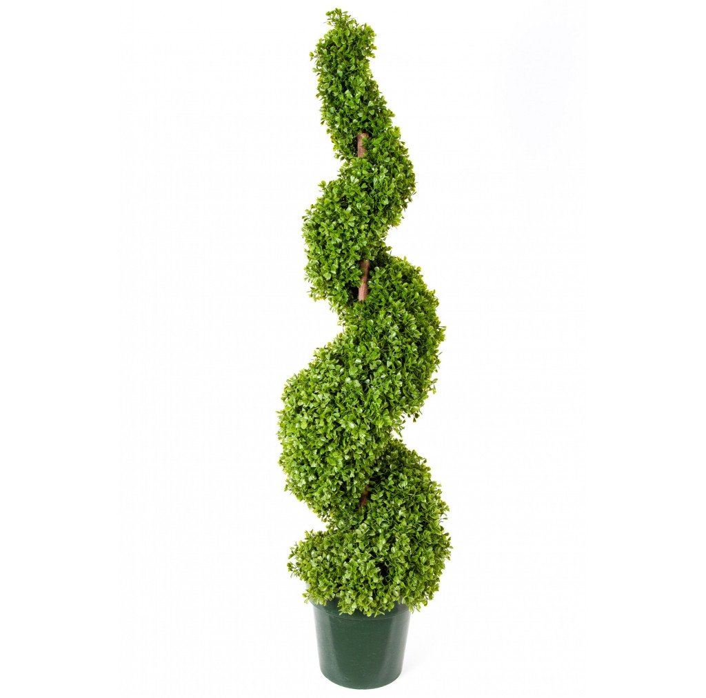 Photo of Boxwood Spiral Chunky, 4'  - Marquis Gardens