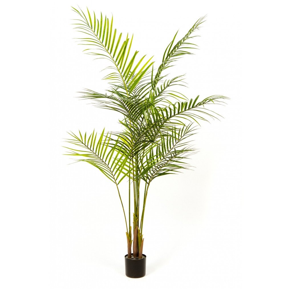"Photo of Deluxe Areca Palm, 72""  - Marquis Gardens"
