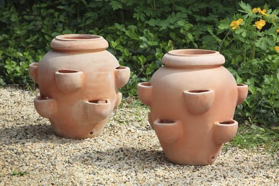 Photo of Campania TASCANDI STRAWBERRY JARS - Marquis Gardens