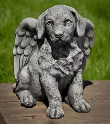 Photo of Campania Angel Puppy - Marquis Gardens