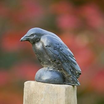 Photo of Campania Small Raven - Marquis Gardens