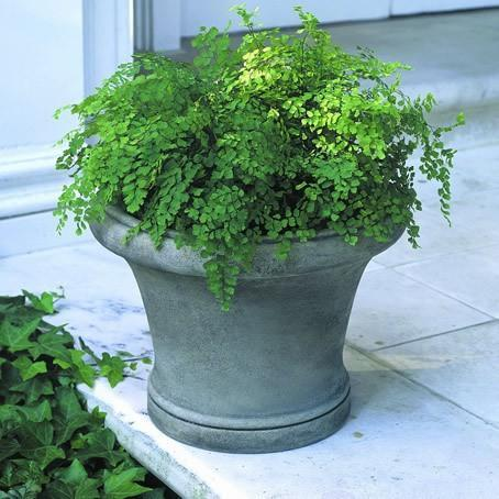 Photo of Campania Westport Planter - Marquis Gardens