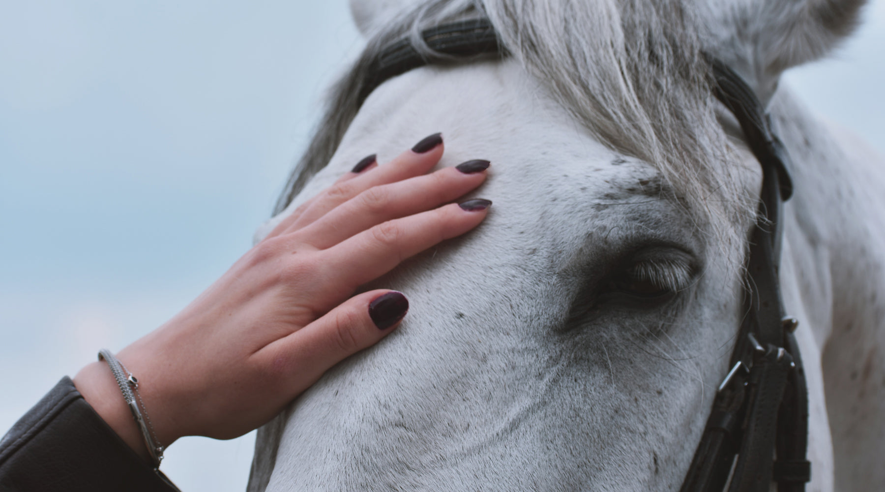 How to Care for Your Horse - Horse care Guide