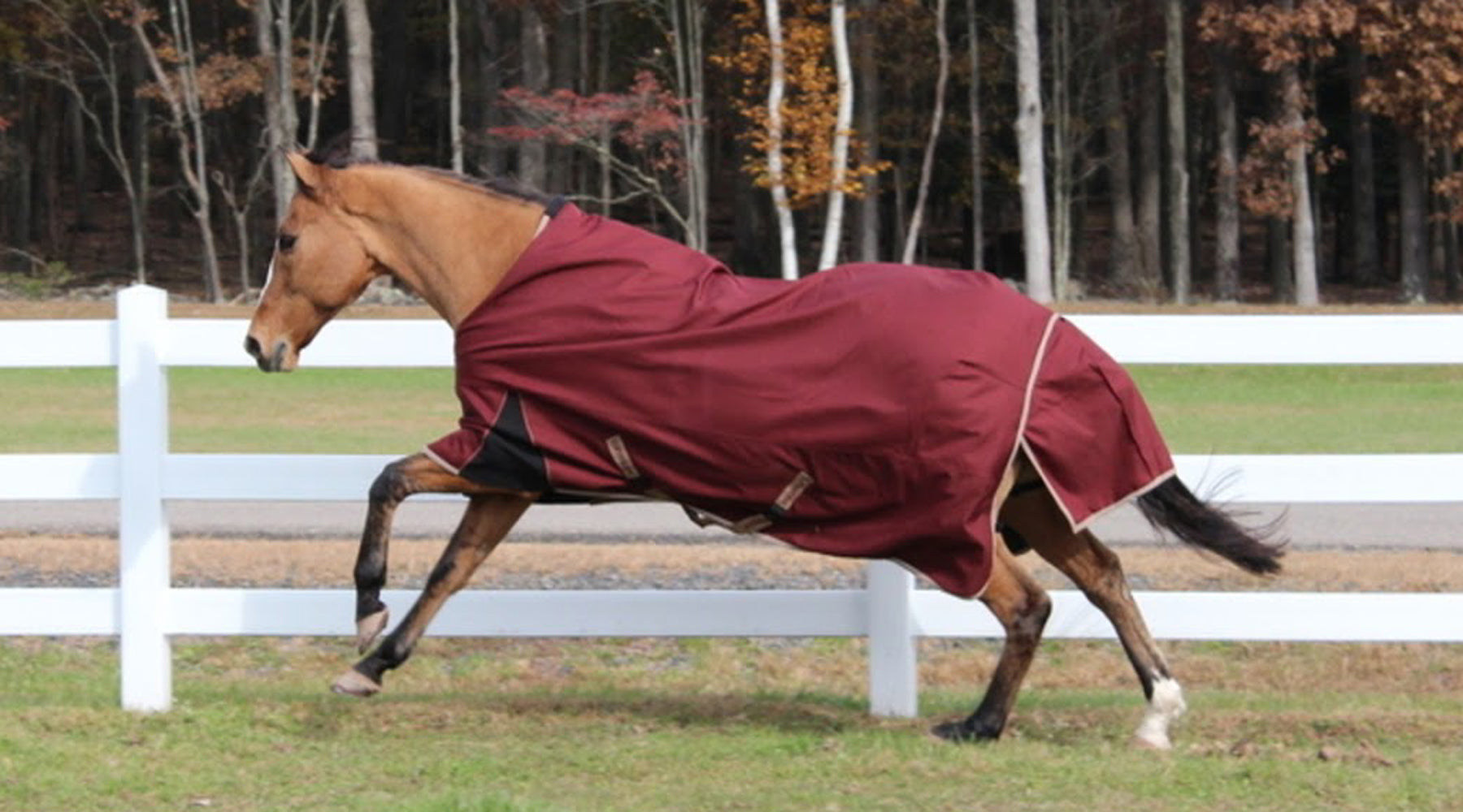 Does My Horse Need A Blanket?  A Guide to Turnout Horse Blanket /Sheets