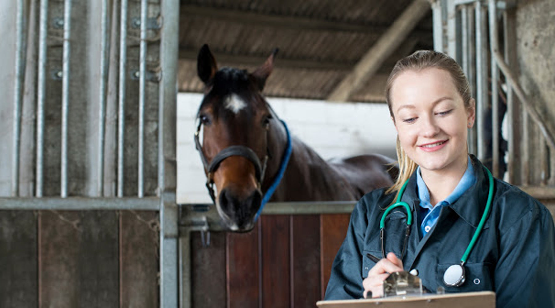 Entering the Equine Industry: Career Guide