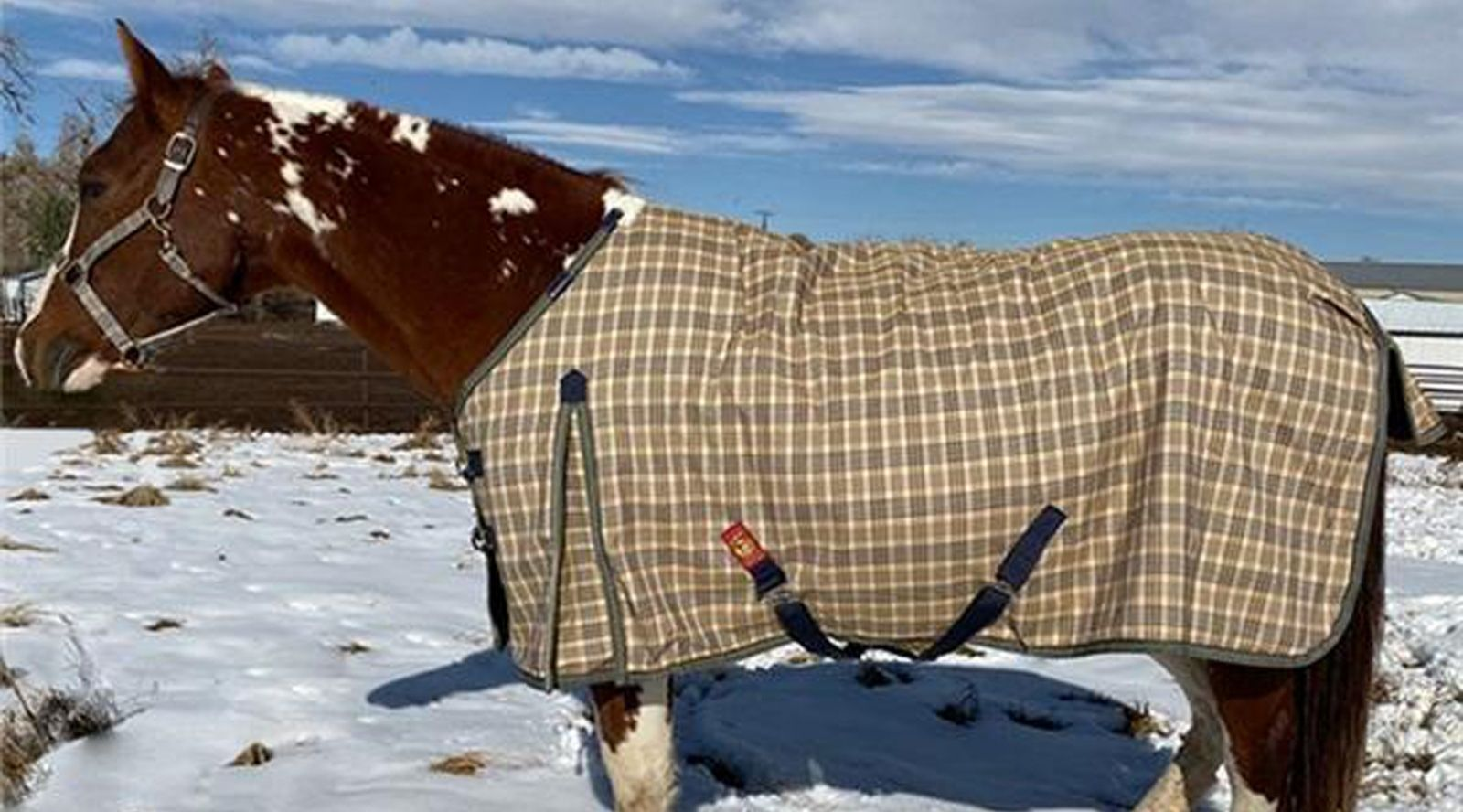 How to Brave the Cold for Riders and Horses