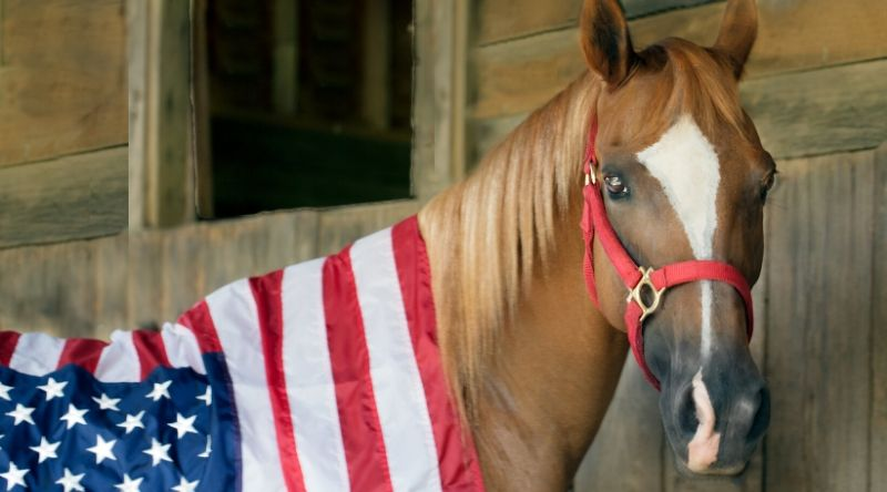 Memorial Day in the Equestrian World: Thank You