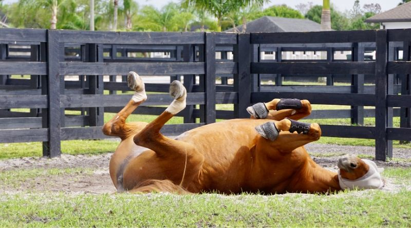 Ways for You and Your Horse to Keep Cool This Summer