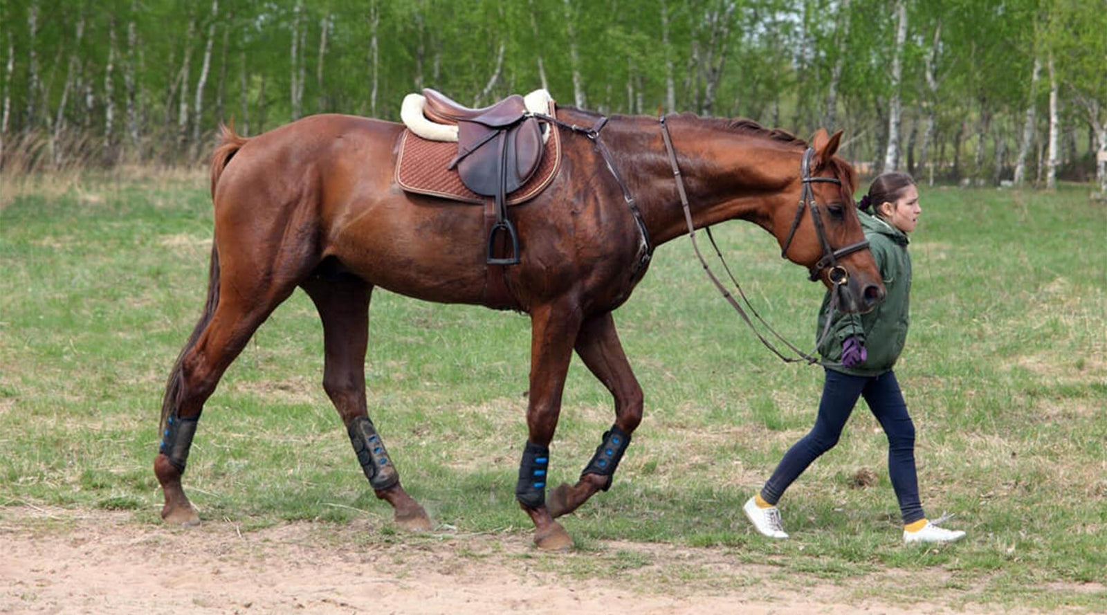 How To Tack Up A Horse English Riding Breeches Com