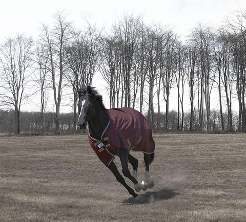 Medium weight winter turnout blanket for horses