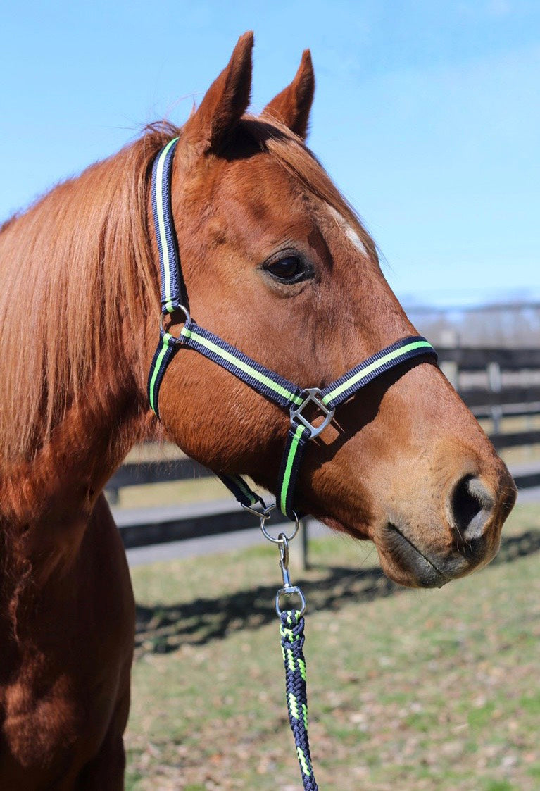 Nylon Breakaway Halter & Lead Set