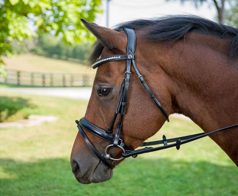 Henri de Rivel Diamonte Dressage Bridle - Breeches.com