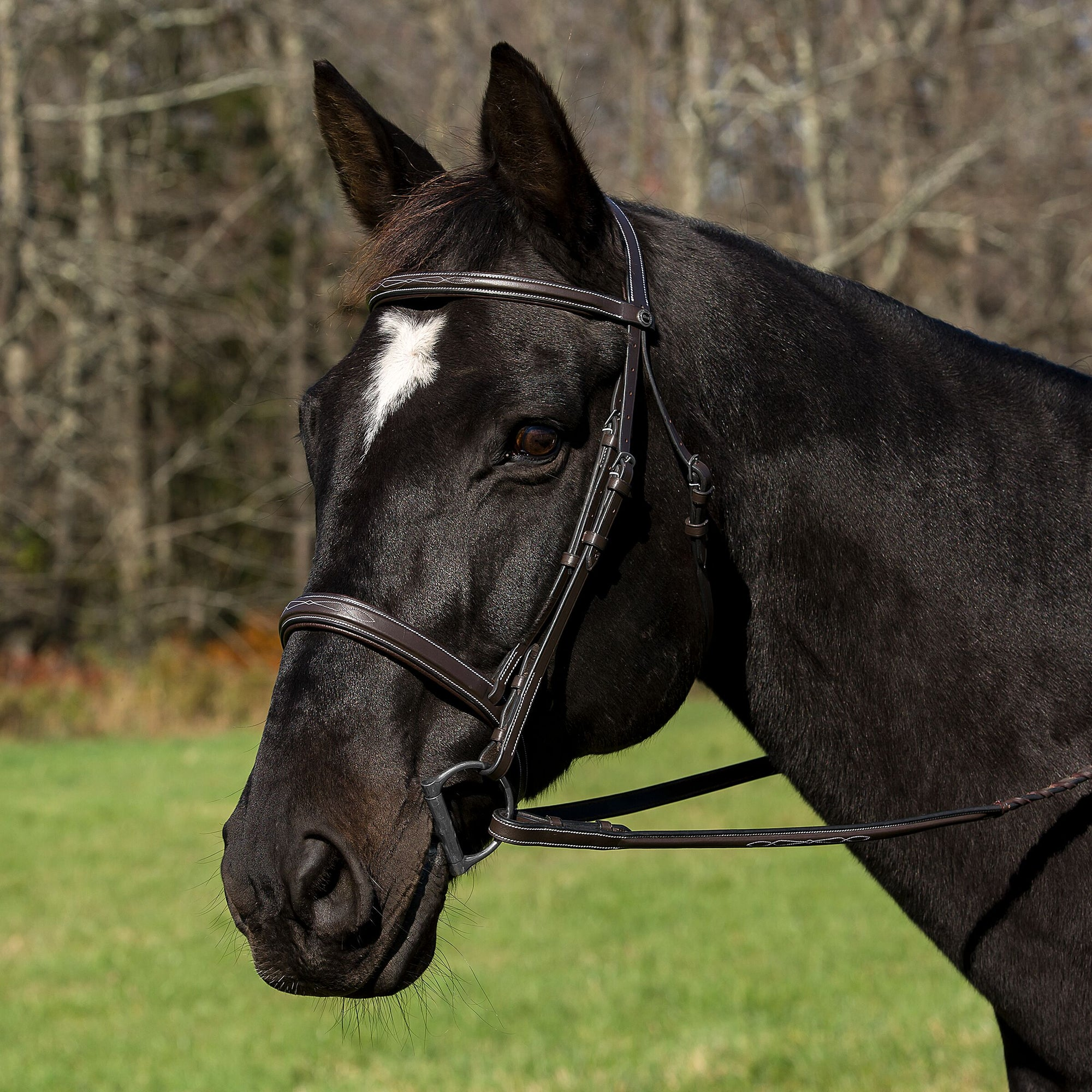 Pro Mono Crown Bridle with Padded Wide Noseband with Laced Reins - Henri de Rivel - Breeches.com