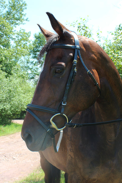 Pro Padded Dressage Bridle with Flash and Web Reins - Henri de Rivel - Breeches.com