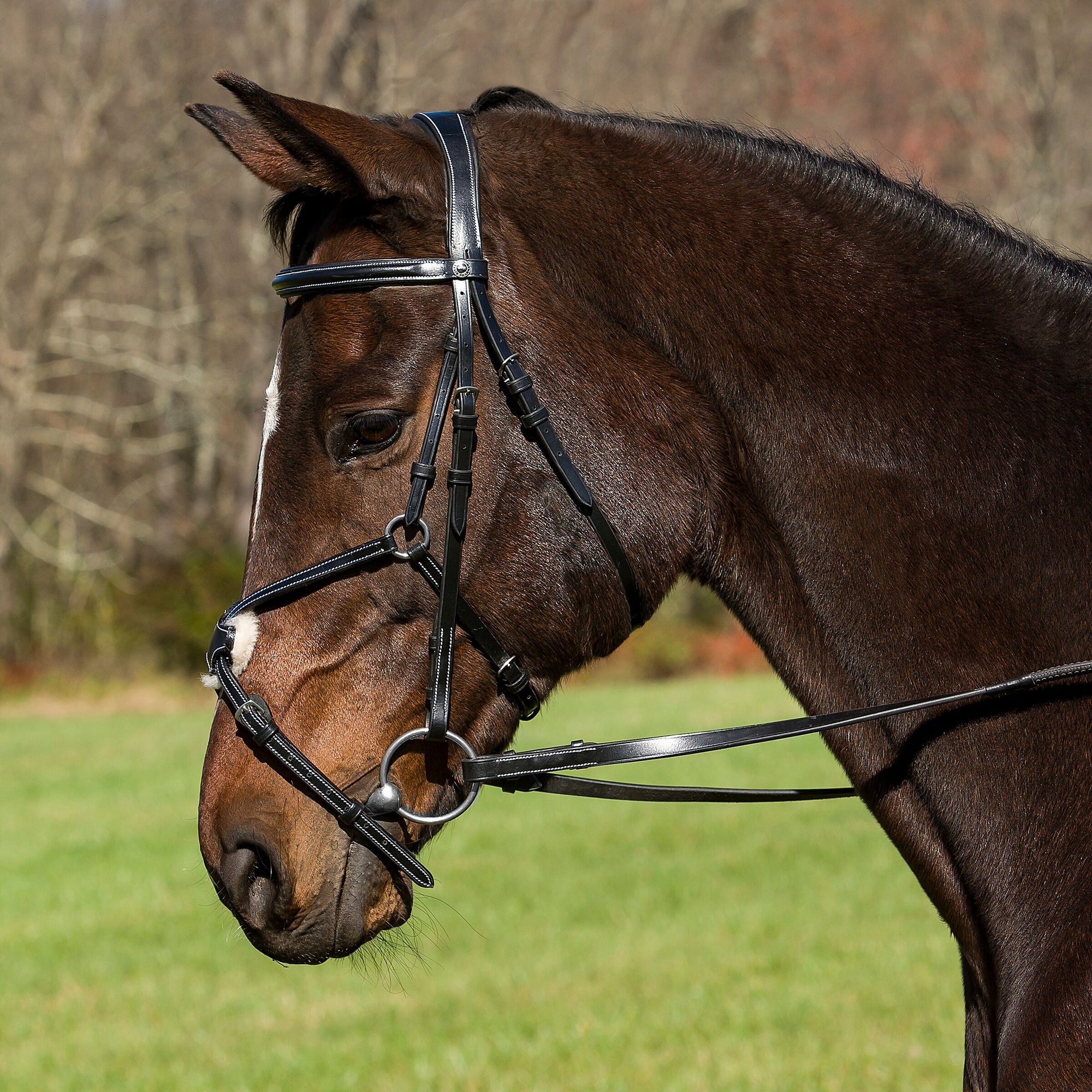 Pro Mono Crown Raised Figure Eight Bridle with Rubber Reins - Henri de Rivel - Breeches.com