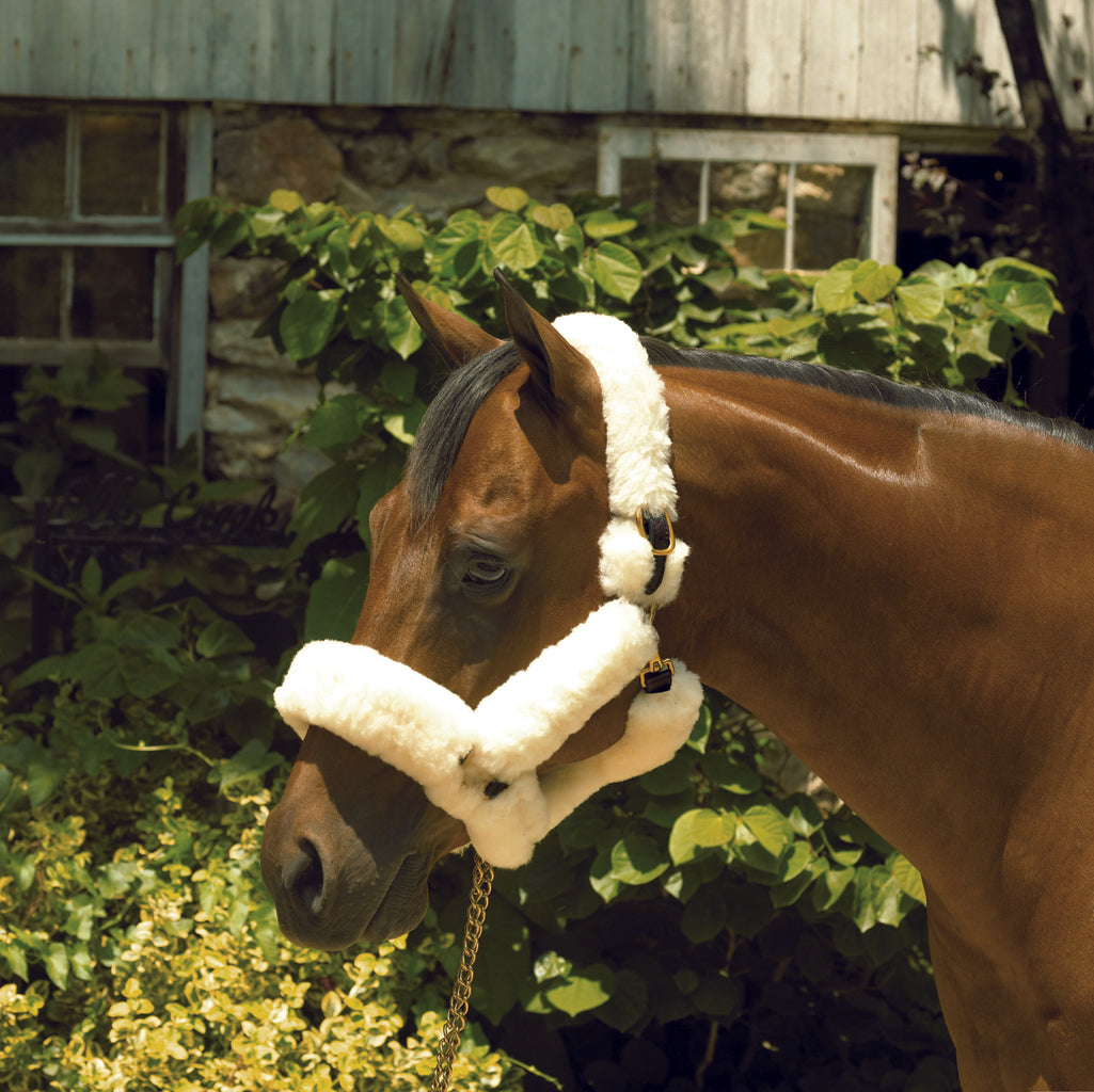 Perri's Leather  Sheepskin Shipping Halter - Perri's Leather - Breeches.com