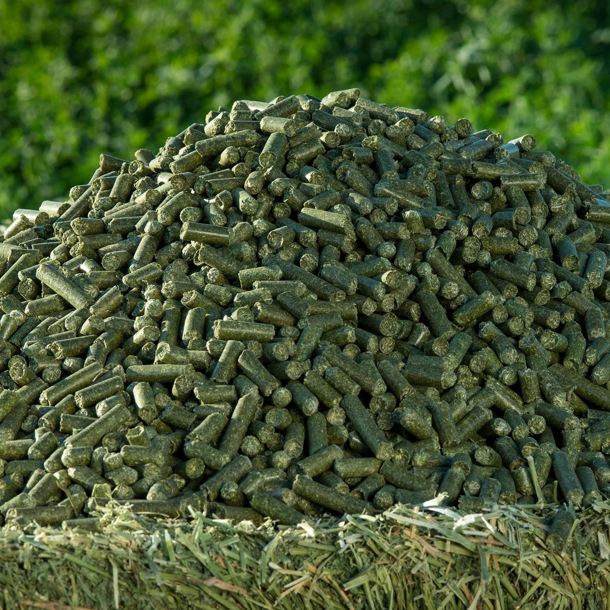 Moringa Pellets for Horse Feed