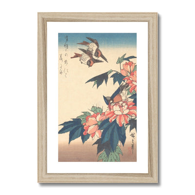 Swallows and Kingfisher with Rose Mallows (1838) - Framed & Mounted Print