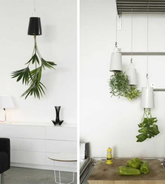 Boskke: Medium Skyplanter