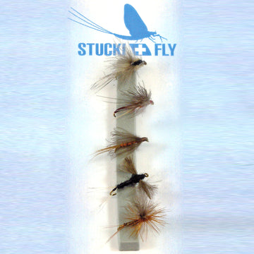 Stucki Fly Set CDC Medium, 5er-Set o.W.