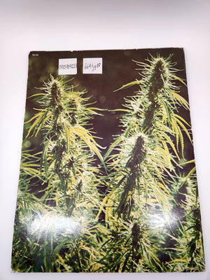 Sinsemilla – Marijuana Flowers Book