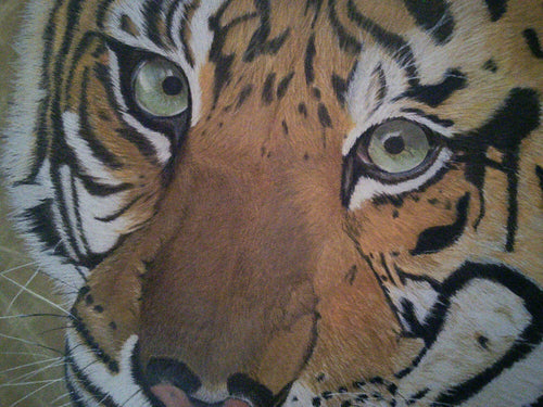 ***SOLD*** Sumatran Tiger Original Drawing