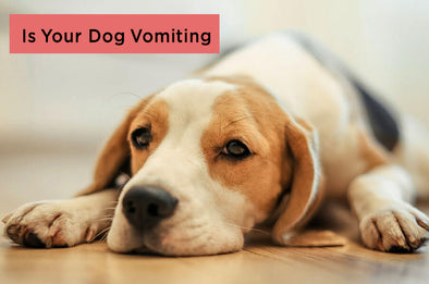 dog vomiting when to call the vet