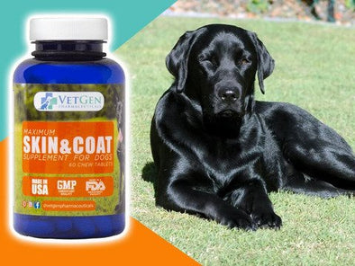 skin and coat supplements for dogs