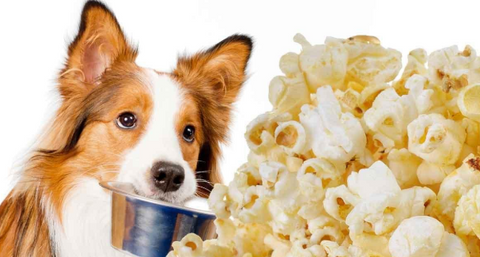 Pop Corn - Dog Food