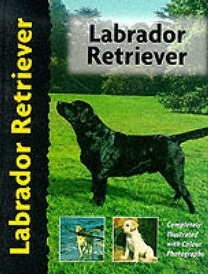 Labrador Retriever (Pet Love)  by Bernard Duke