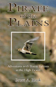 Pirate Of The Plains: Adventure With Prairie Falcons In The High Desert by Bruce Haak
