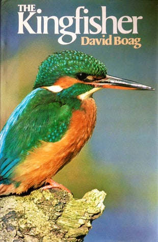 The Kingfisher by David Boag