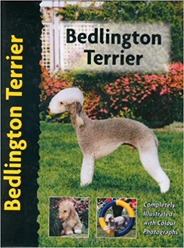 Bedlington Terrier (Pet Love) by Muriel P. Lee