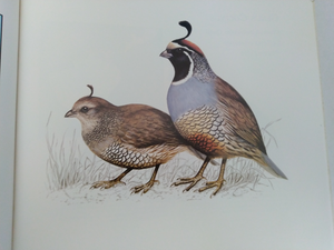 The Atlas Of Quails by David Alderton, David Alerton