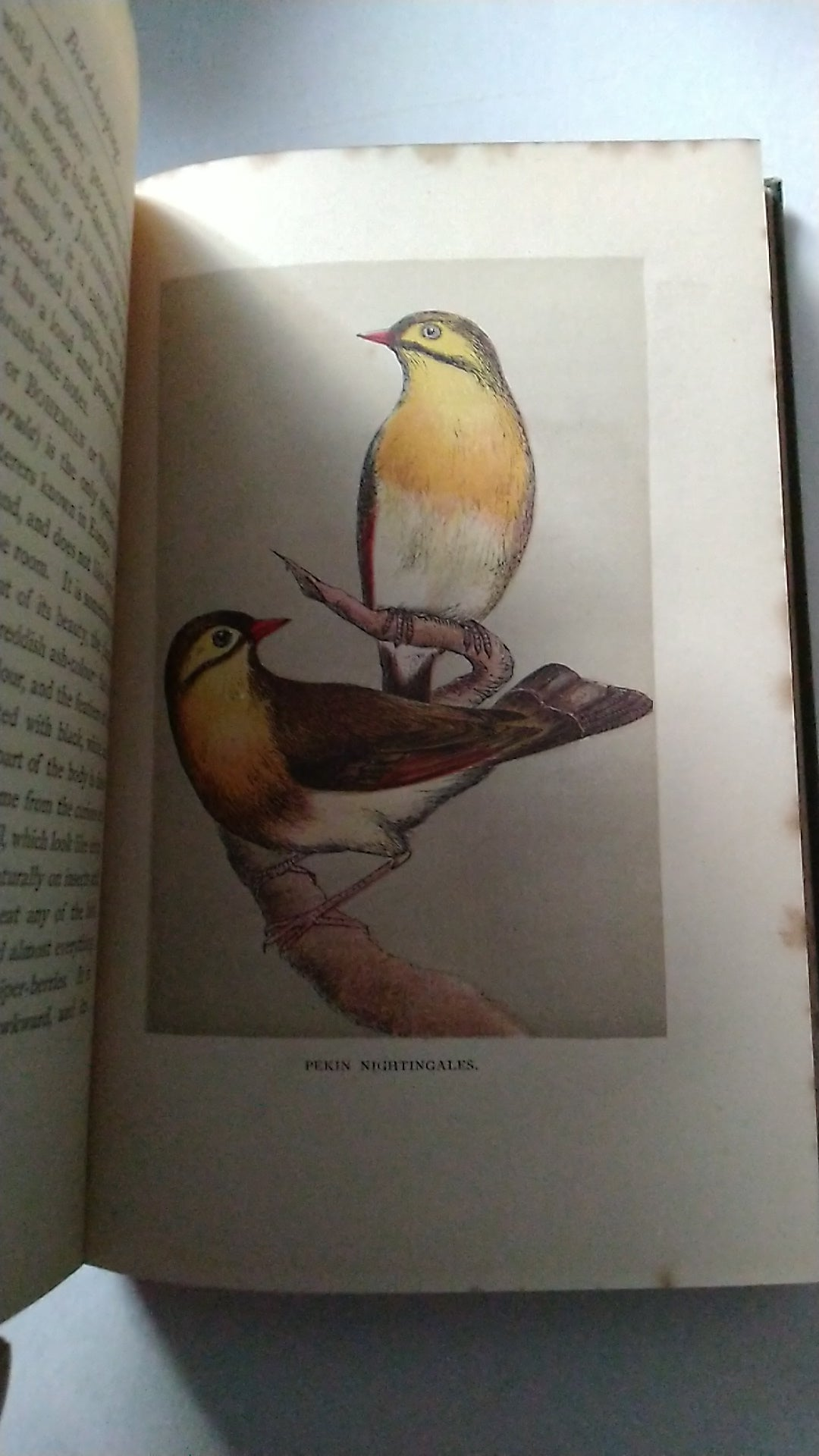 Bird Keeping  a Practical Guide by C E Dyson 1889