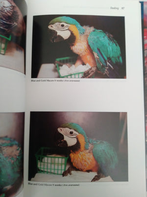 Parrots: Handfeeding and Nursery Management by Rick Jordan