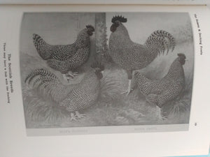 The Sussex and Dorking Fowls by Joseph Batty