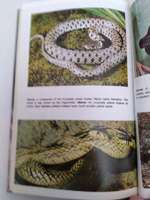 Boas and Other Nonvenomous Snakes by Werner Frank