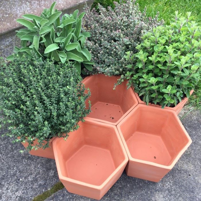 Hexagonal Herb Pot