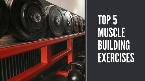 The Top 5 Muscle Building Exercises