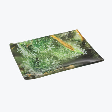 Tricomb Jungle Glass Rolling Tray - Small - Shag Alternative Superstore