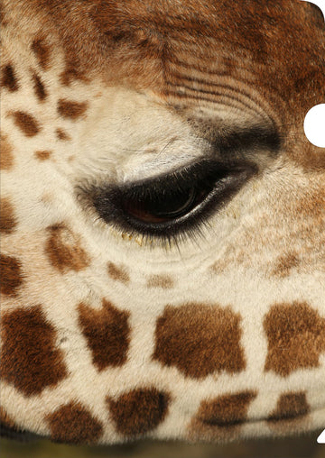 Giraffe Document Cover
