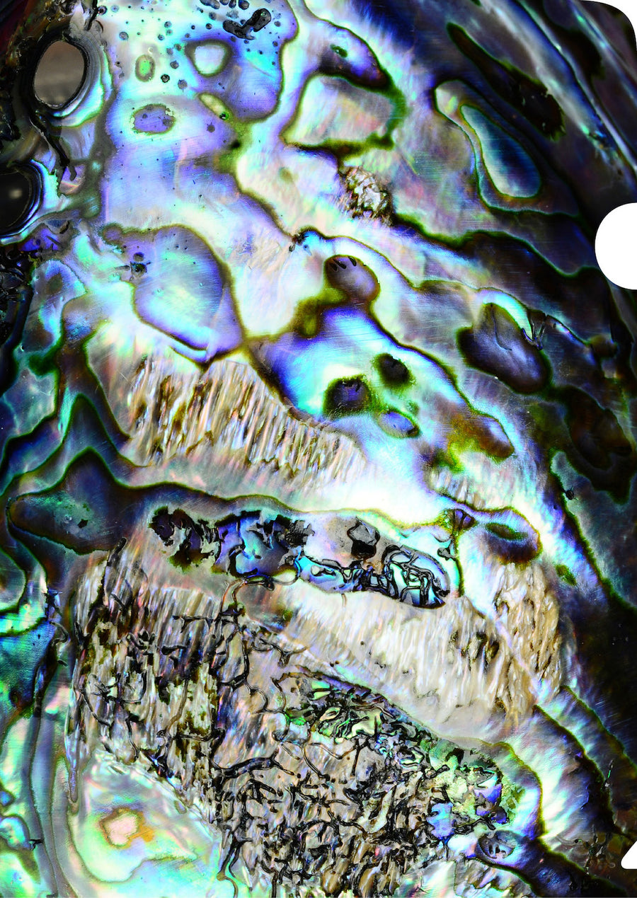 Paua Document Cover