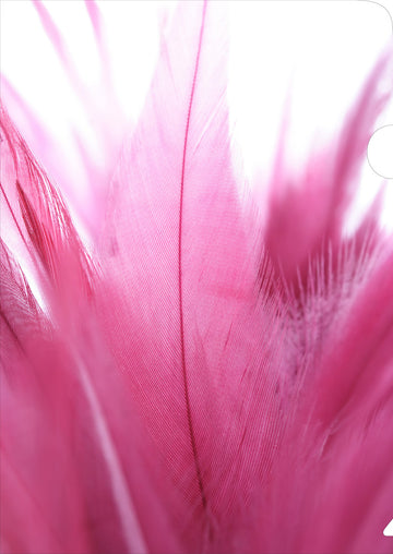 Pink Feathers Document Cover
