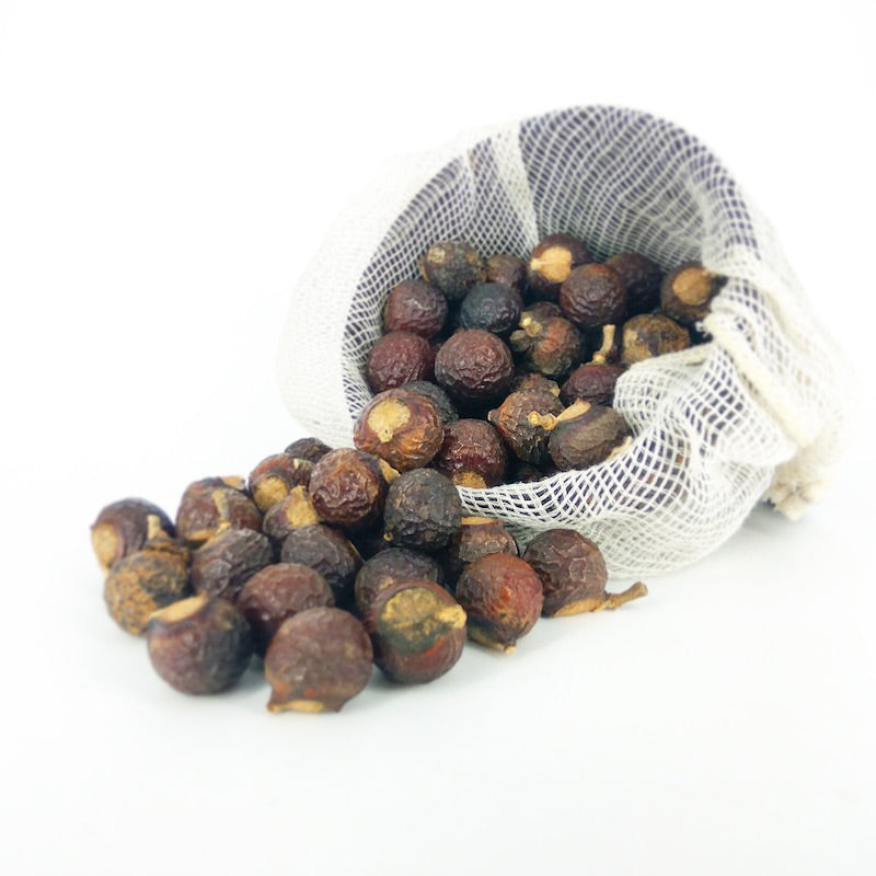 soap nuts soapberry Myanmar natural