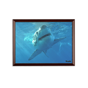 Sublimation Wall Plaque - Surrounded by Sharks Collection