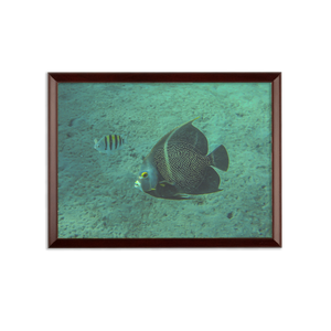 Sublimation Wall Plaque - Reef Fish Collection - Angel