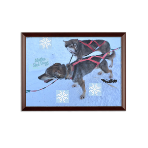 Sublimation Wall Plaque - Alaska Sled Dogs Collection